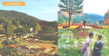 超唯美夢幻啊~《雲畫的月光》的人氣拍攝景點~京畿道的世外桃源「晨靜樹木園」!